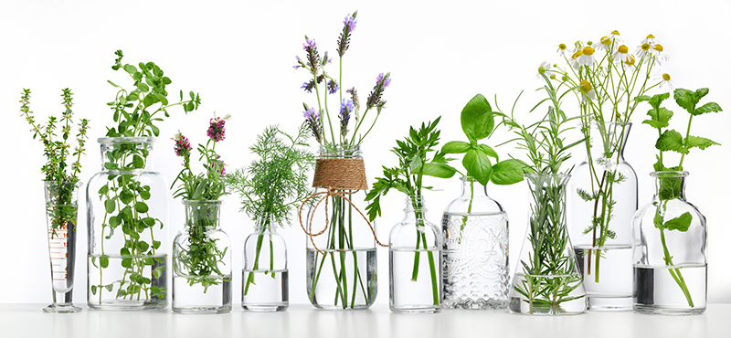 Various Plants used in naturopathic medicine and alternative health therapies